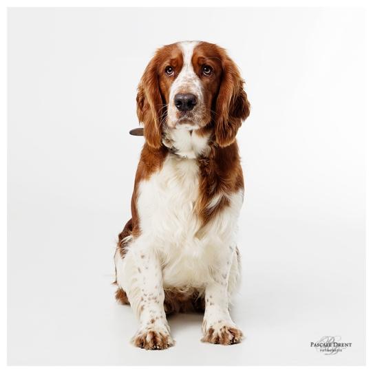 Dotan hondenfotografie fb